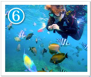 熱帯魚の餌付け体験