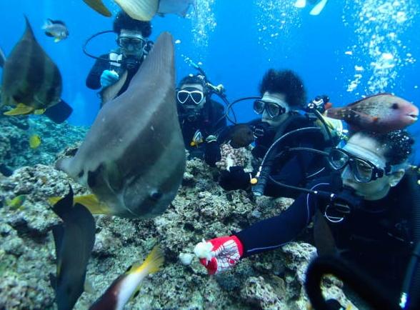 サンゴ礁で沖縄ダイビング
