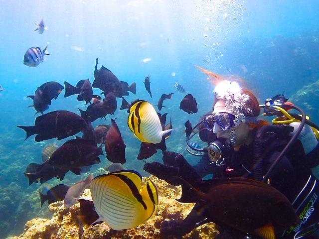 魚の大群とサンゴ礁ダイビング