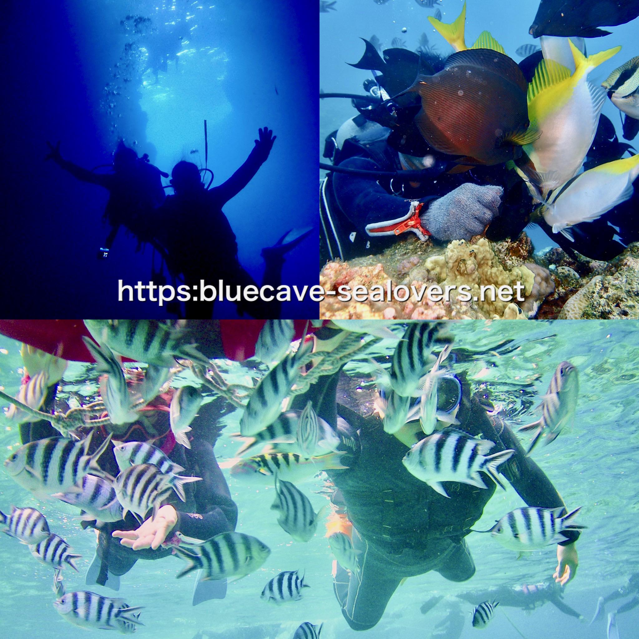 青の洞窟ボート体験ダイビング クマノミ城ボートシュノーケリング ボートファンダイビング