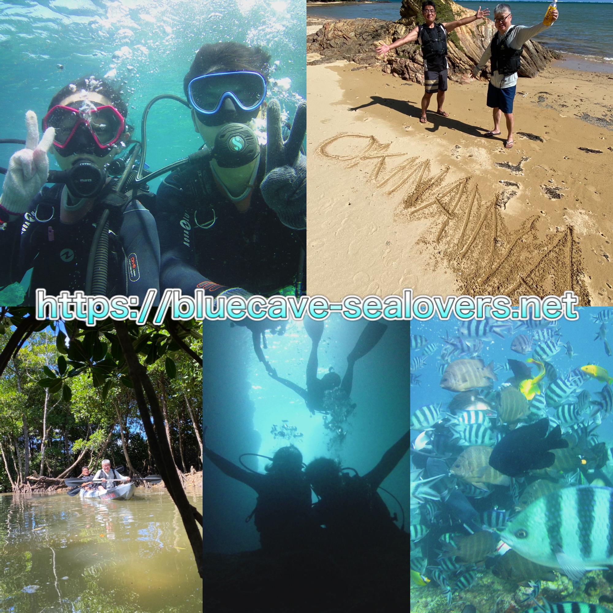 青の洞窟 ダイビング マングローブカヤック